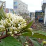 В соседнем Краснотурьинске расцвели цветы