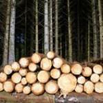 На директора ООО «Волчанский лес» завели два уголовных дела