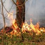 Тушением лесных пожаров в Карпинске займется новое предприятие