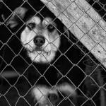 Собачьи слезы
