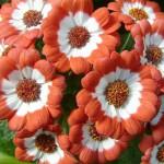 В Карпинске 685 тысяч рублей потратят на цветы
