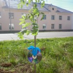 В Карпинске появилась аллея доброты