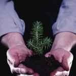 В Карпинске высадят молодые деревья