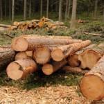 Лесозаготовительное предприятие Карпинска оштрафовано почти на полмиллиона