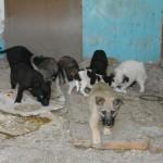 В одном из бараков Карпинска умирают от голода около 20 щенков