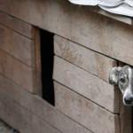 В Карпинске может появиться приют для собак