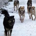 В Карпинске сотрудники мэрии ищут здание, чтобы содержать беспризорных собак
