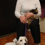 63-летняя пенсионерка дает кров бездомным животным и просит горожан присоединиться