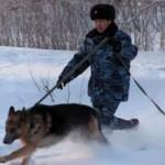 В Волчанске полицейская собака нашла преступника