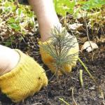 Карпинску предлагают присоединиться к дню посадки леса
