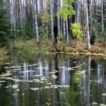 Житель Серова обнаружил на болоте труп ветерана войны