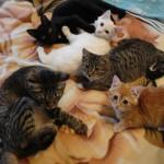 Пятеро котят из Карпинска ищут хозяев
