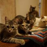 В квартире 60-летней жительницы Карпинска живет 14 кошек