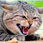 В Карпинске началась вакцинация животных от бешенства