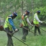 В Карпинске 1,5 миллиона рублей потратят на кошение травы