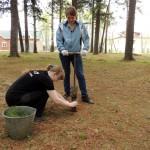 Воспитанники Карпинской станции туризма высадили 100 кедров