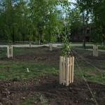 Возле Карпинского ФОКа высадили деревья