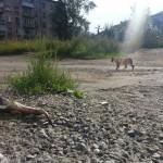 В Карпинске закрывается единственный приют для бездомных животных. Нет денег на содержание