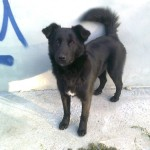 В Карпинске продолжается спецакция «Найди хозяина бездомному животному»