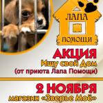 В Карпинске приют для животных проводит акцию «Ищу свой дом»
