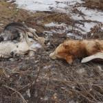 Собаки лежат рядом с ручьем, что течет на родник