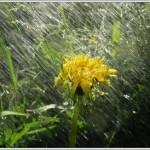 В Карпинске ожидаются дожди, но не сильные