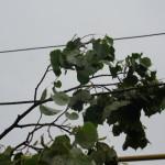 Для Карпинского округа получено экстренное метеорологическое предупреждение