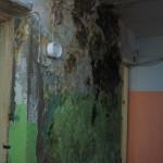 Коммунальная плесень. В бывшем общежитии начался ремонт