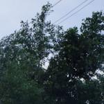 В Карпинске порывы ветра - до 20 метров в секунду, дождь, возможен подъем воды в реках
