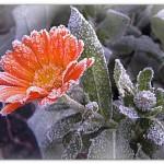В Карпинске возможны заморозки