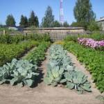 Карпинские садоводы смогут задать вопросы по
