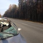 Вчера на трассе Серов-Ивдель при столкновении машины с лосем погиб 29-летний мужчина