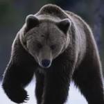 Пострадавшего от зверя карпинца подобрал турист из Санкт-Петербурга