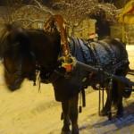 По площади детишек катали лошади