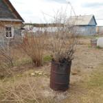 Карпинских садоводов предупреждают: за опасное сжигание травы могут оштрафовать