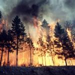 Карпинское лесничество призывает: берегите лес от пожара!