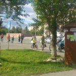 В Карпинске численность собак все же надеются отрегулировать