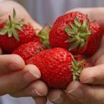 В Карпинске на мини-рынках появилась первая продукция садоводов. Цены