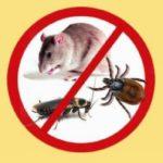 Дом атакуют тараканы. И мыши!
