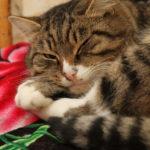 Карпинские котики: дальнейшая судьба