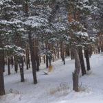В Карпинске мороза нет, но порывы сильного ветра