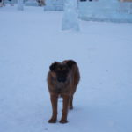 СМИ: денег на бродячих собак Карпинску выделили меньше, чем в прошлом году