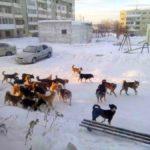 В Карпинске отловят 51 собаку. Бригада будет из Серова