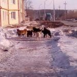 В Карпинске идет отлов бродячих собак