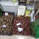 Картошку весной покупают не для еды, а на посадку