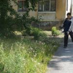 В Карпинске траву скосят и на площадях, и в частном секторе