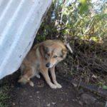 Отлов собак в Карпинске будет продолжен
