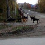В Карпинске отловят еще 35 собак, но проблему это не решит