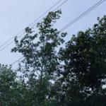 На Урале хозяйничает шквалистый ветер
