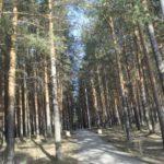 Определен «благоустроитель» карпинского парка Комсомольский